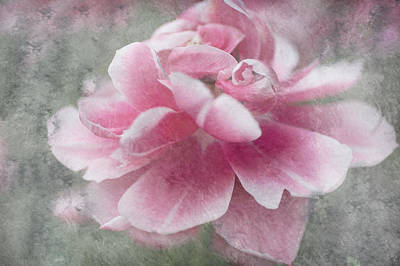 Flower Healing Art Photograph - Divine Gift by Jenny Rainbow