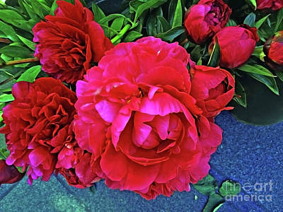 Photograph - Divine Peony by Jasna Dragun