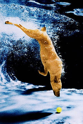 Diving Dog Photograph - Diving Dog Underwater by Jill Reger