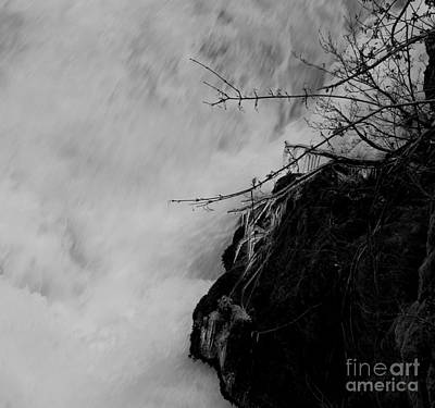 Photograph - Diving Icicles by Marie Neder