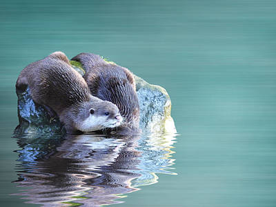 Otter Photograph - Diving In by Sharon Lisa Clarke