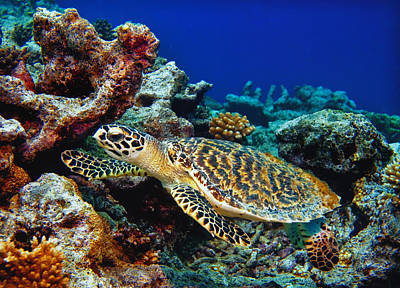 Lee Craker Royalty-Free and Rights-Managed Images - Diving the Kwajalein Atoll by Lee Craker