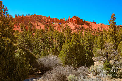 Photograph - Dixie National Forest by Robert Bales
