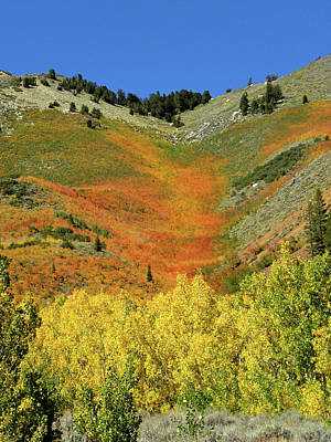 Photograph - Dm6491 Fall Colors Near North Lake by Ed Cooper Photography