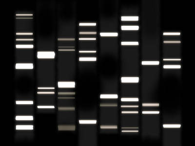 Dna Art White On Black Print by Michael Tompsett