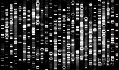 Photograph - Dna - Black - Doc Braham - All Rights Reserved by Doc Braham
