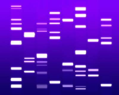 Dna Purple Print by Michael Tompsett