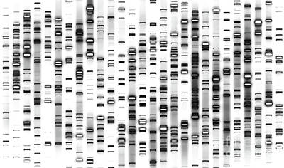 Photograph - Dna White - Doc Braham - All Rights Reserved by Doc Braham