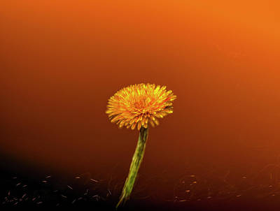 Digital Art - Dandelion 2 #g3 by Leif Sohlman