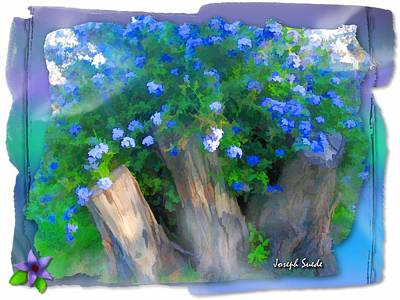 Photograph - Do-00148 Bushy Blue Flowers by Digital Oil