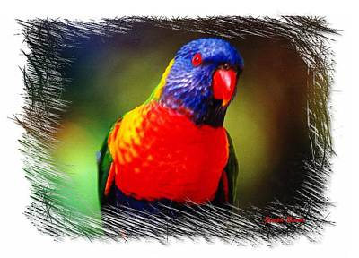 Do-00153 Colourful Lorikeet Art Print by Digital Oil