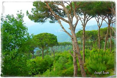 Photograph - Do-00301 Pine Trees Forest In Aaraya by Digital Oil