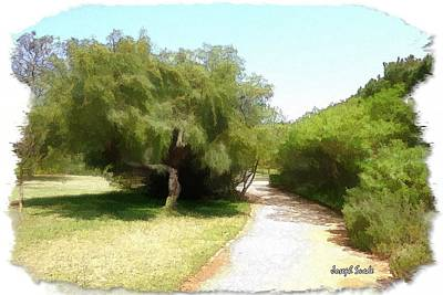 Photograph - Do-00336 -pathway Bois Des Pins by Digital Oil