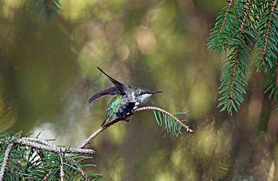 Photograph - Do A Little Dance by Debbie Oppermann