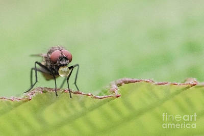 Nikki Vig Royalty-Free and Rights-Managed Images - Do Flies Drink Water by Nikki Vig