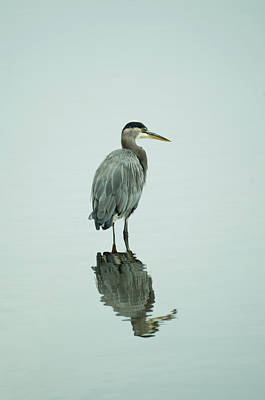 Photograph - Wading For Dinner by Marilyn Wilson