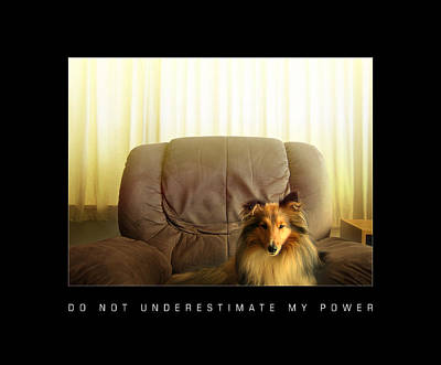Miniature Collie Photograph - Do Not Underestimate My Power by Sheltie Planet