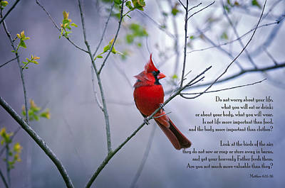 Red Bird Photograph - Do Not Worry . . .  by Bonnie Barry