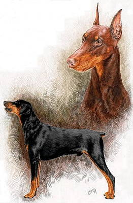 Drawing - Doberman Double by Barbara Keith