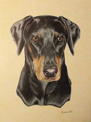 Pinscher Drawing - Doberman Portrait by John Michaud