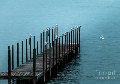 Photograph - Dock Weirs by Mim White