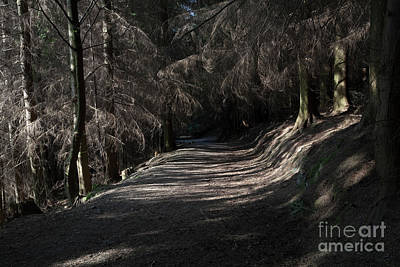 Photograph - Dodd Wood Track by Gavin Dronfield