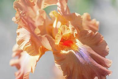 Photograph - Dodge City Macro. The Beauty Of Irises by Jenny Rainbow