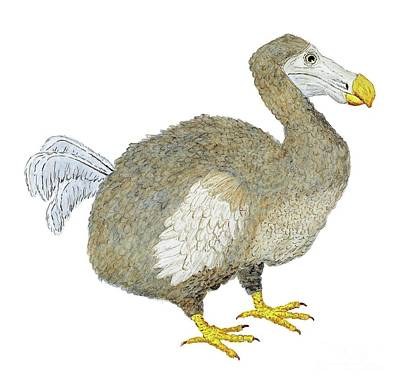 Print featuring the painting Dodo Bird Protrait by Thom Glace