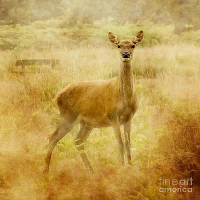 Pathway Digital Art - Doe A Deer A Female Deer by Linsey Williams