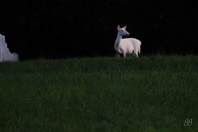 Photograph - Doe, A Deer by Geri Glavis