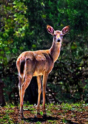 Photograph - Doe A Deer In Thousand Trails by Bob and Nadine Johnston