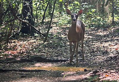 Doe A Deer - Enhanced Art Print