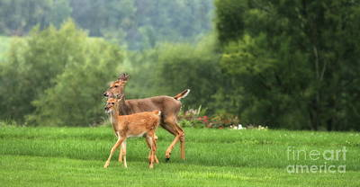 Photograph - Doe And Fawn by Angela Rath