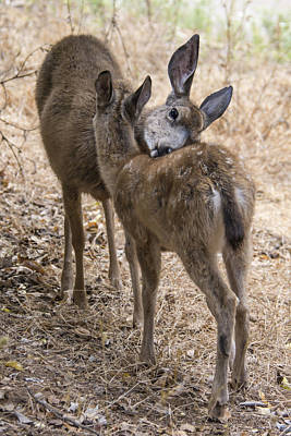 Doe And Fawn Art Print by Bruce Frye