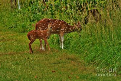 Photograph - Doe And Fawn Feeding by Craig Wood
