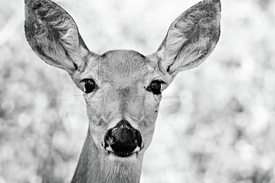 Photograph - Doe Eyes - Bw by Lana Trussell