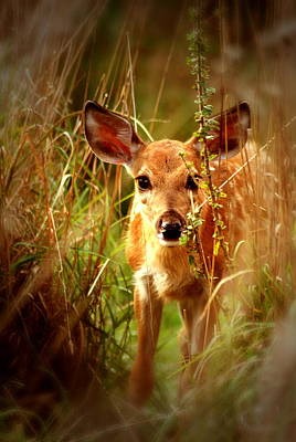Monster Buck Photograph - Doe Eyes by Emily Stauring