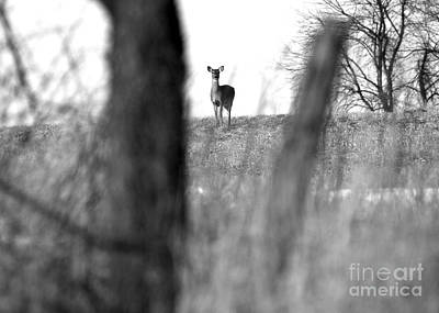 Photograph - Doe In Autumn Black And White by Angela Rath