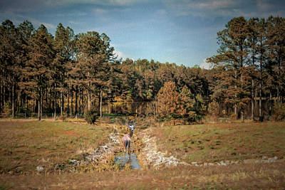 Photograph - Doe In Cane Creek by Jai Johnson