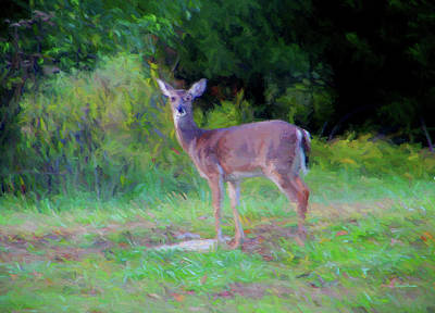 Painting - Doe In The Field 0430 - Painting by Ericamaxine Price