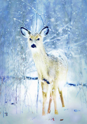Wall Art - Photograph - Doe In The Snow by Amanda Lakey