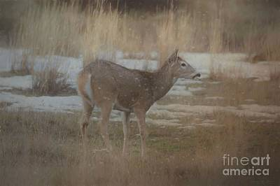Photograph - Doe In The Snow by Teresa Wilson