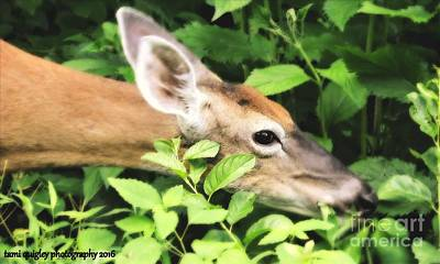 Photograph - Doe In The Spring Greens ... by Tami Quigley