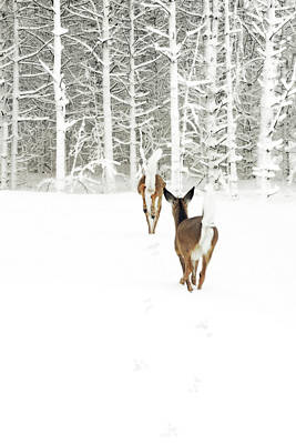 Photograph - Doe In Winter by Brooke T Ryan