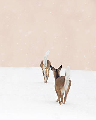 Photograph - Doe In Winter On Blush Pink by Brooke T Ryan
