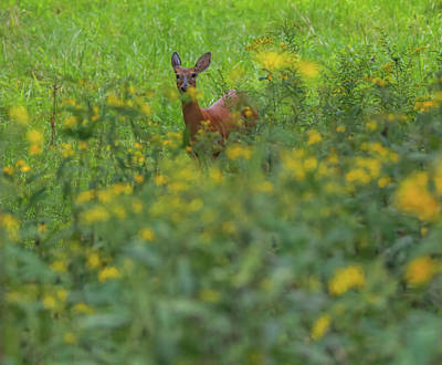 Photograph - Doe In Yellow Wildflowers by Dan Sproul