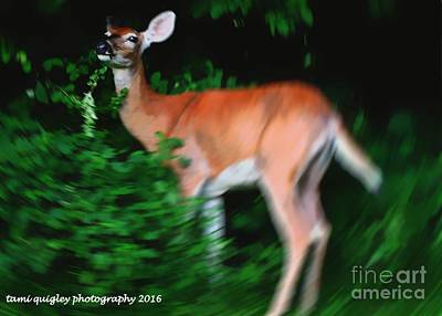 Photograph - Doe Of A Midsummer Night by Tami Quigley