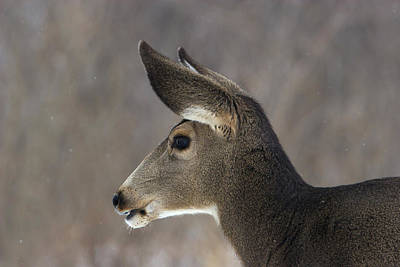 Photograph - Doe Profile by Mark Miller