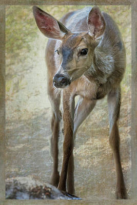 Photograph - Doe Timidly Moving Past  by Belinda Greb