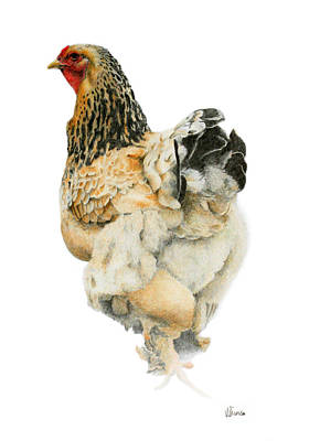 Chooks Drawing - Does My Bum Look Big? by Vicky Prince